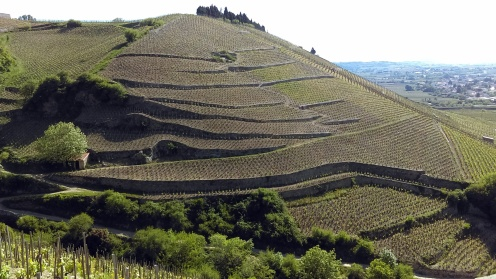 wine terraces